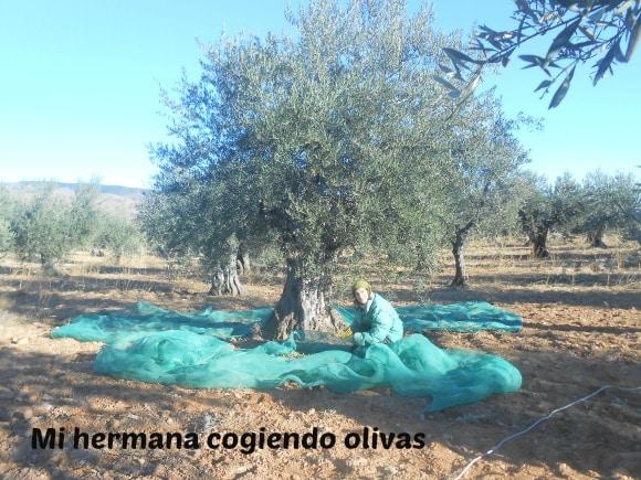 esther cogiendo olivas