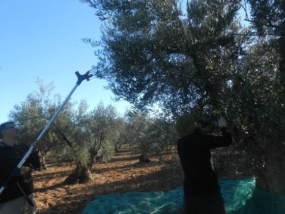 maquina olivas