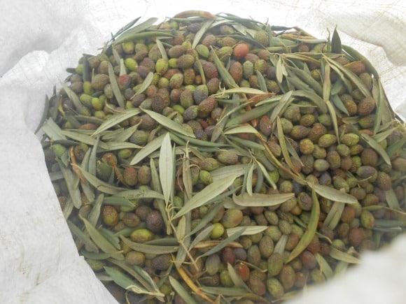 saco de olivas