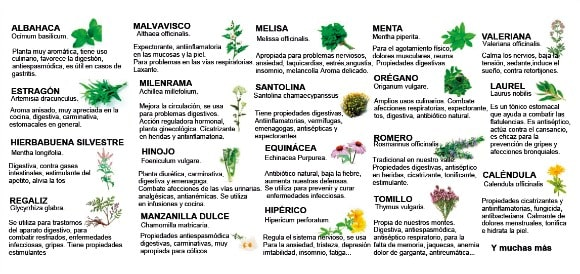plantas aromáticas propiedades